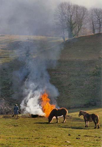 Feux et chevaux - Image à interpréter